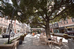 A mature tree in a central pedestrian plaza creates a great place to relax